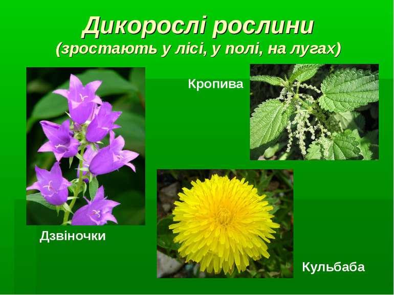 Дикорослі рослини (зростають у лісі, у полі, на лугах) Дзвіночки Кульбаба Кро...
