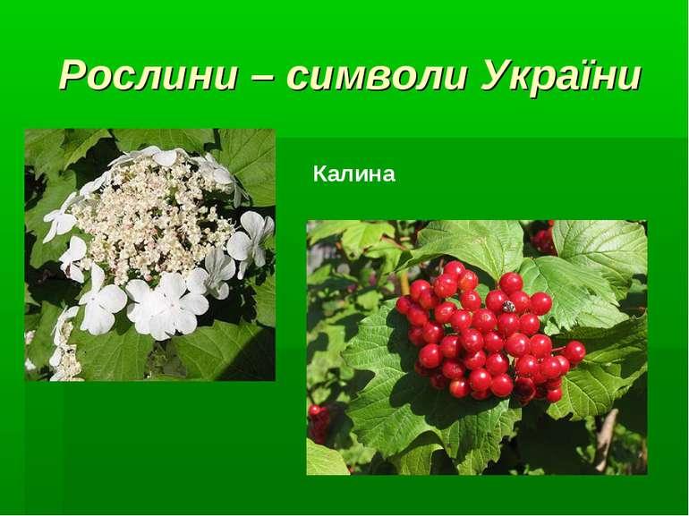 Рослини – символи України Калина
