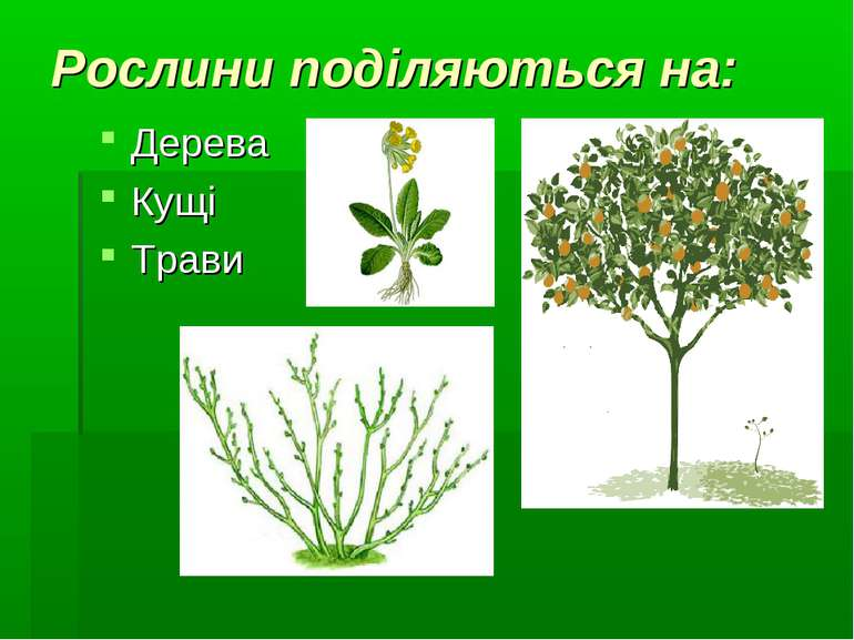 Рослини поділяються на: Дерева Кущі Трави