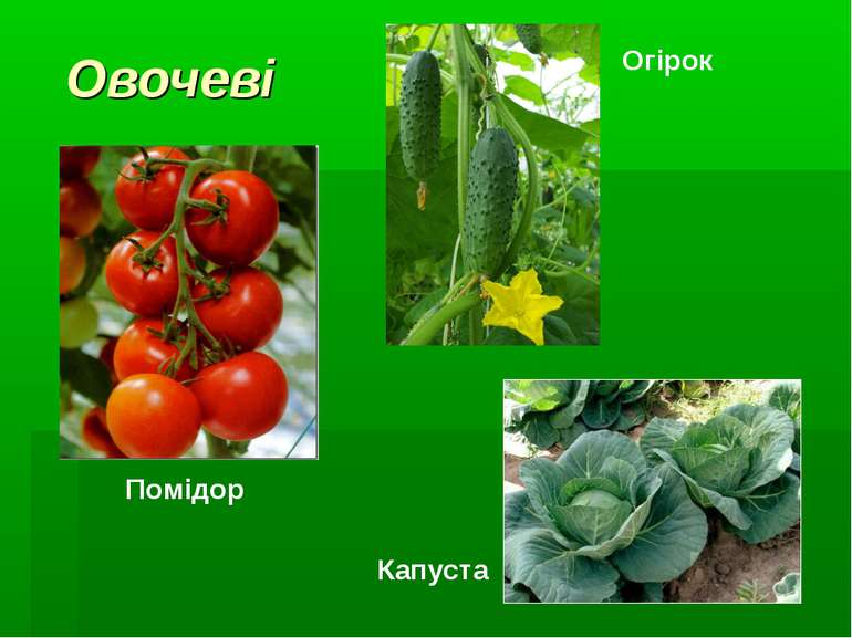 Овочеві Помідор Огірок Капуста