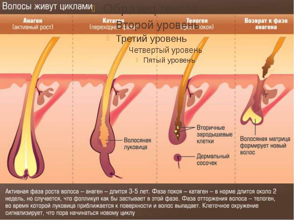 Аюрведическое средство при выпадении волос