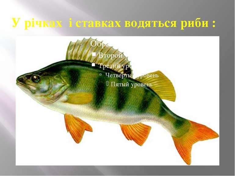 У річках і ставках водяться риби :