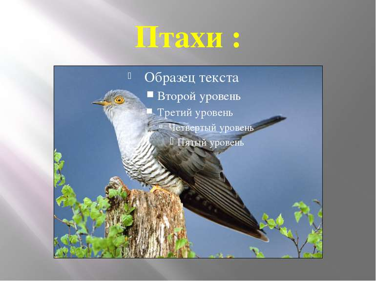Птахи :