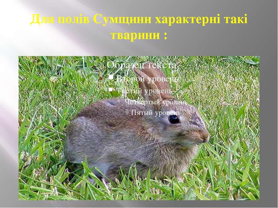 Для полів Сумщини характерні такі тварини :