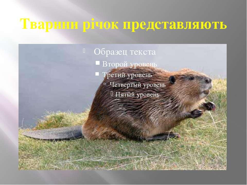 Тварини річок представляють