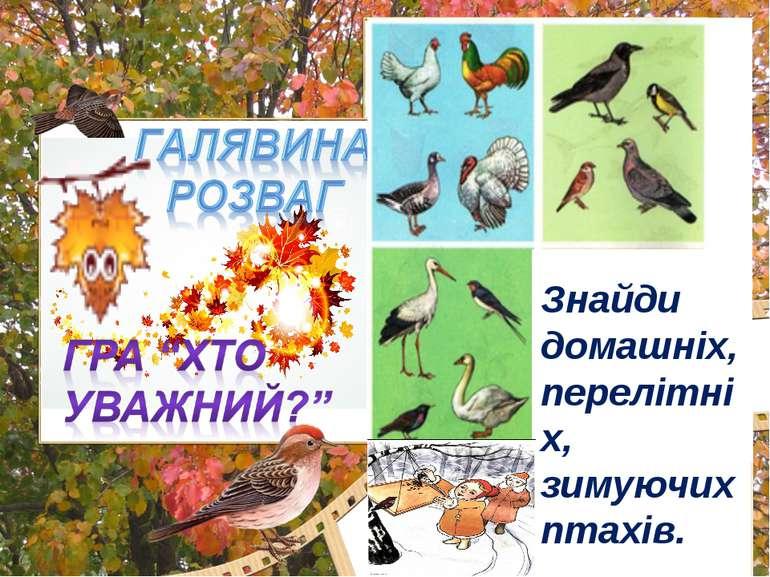 Який малюнок зайвий? Знайди домашніх, перелітніх, зимуючих птахів.