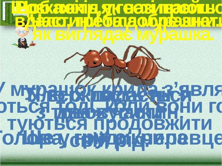 Щоб похід у гості пройшов вдало, треба добре знати, як виглядає мурашка. Розк...