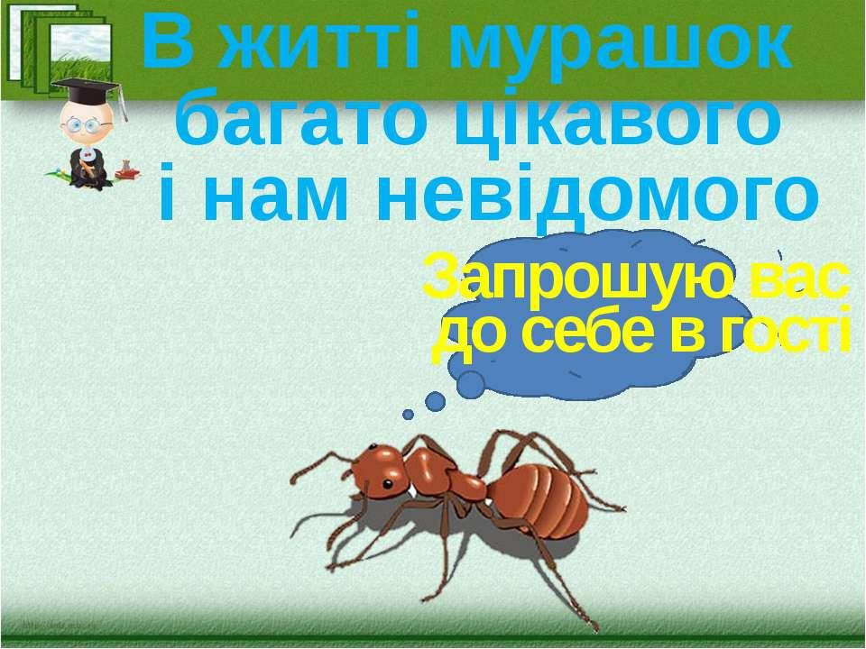 В житті мурашок багато цікавого і нам невідомого Запрошую вас до себе в гості