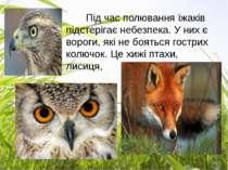 Під час полювання їжаків підстерігає небезпека. У них є вороги, які не боятьс...