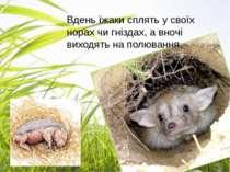 Вдень їжаки сплять у своїх норах чи гніздах, а вночі виходять на полювання.