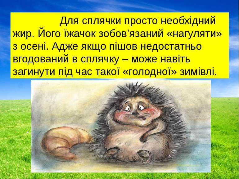 Для сплячки просто необхідний жир. Його їжачок зобов'язаний «нагуляти» з осен...
