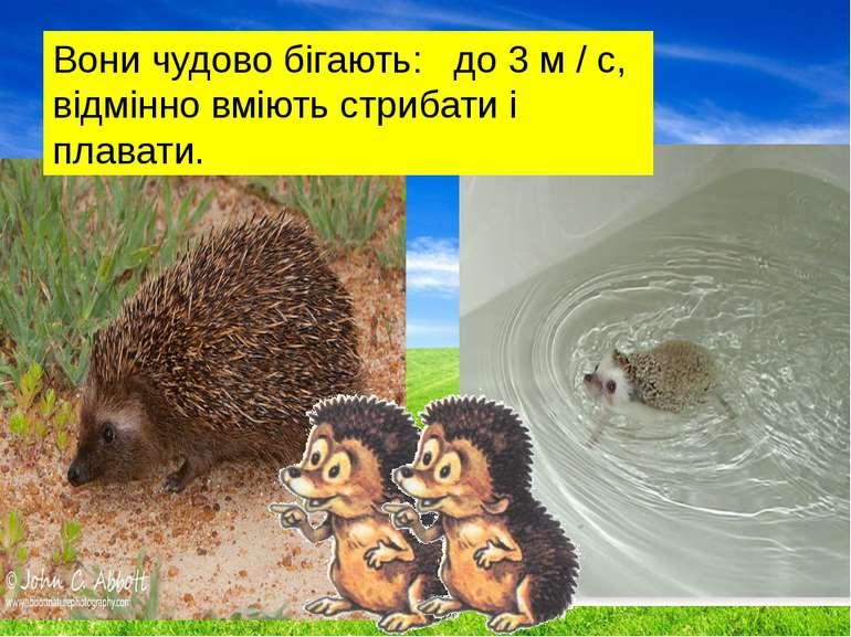 Вони чудово бігають: до 3 м / с, відмінно вміють стрибати і плавати.