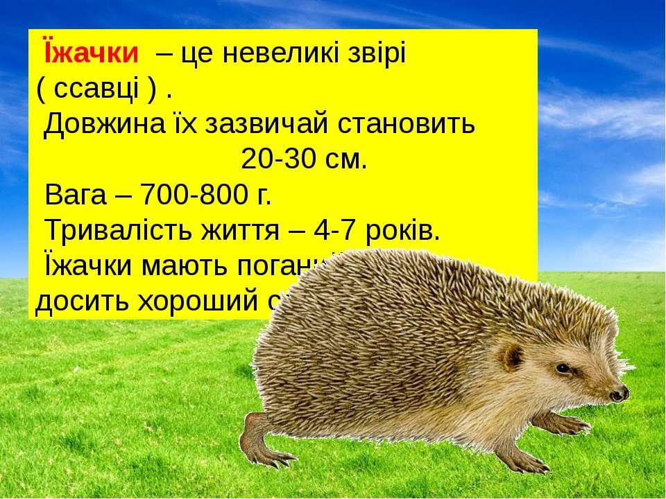 Їжачки – це невеликі звірі ( ссавці ) . Довжина їх зазвичай становить 20-30 с...