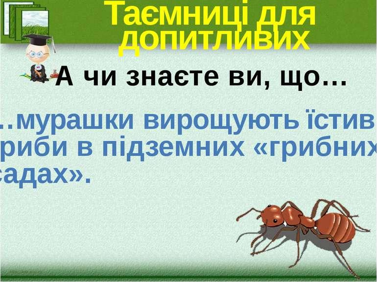Таємниці для допитливих …мурашки вирощують їстивні гриби в підземних «грибних...