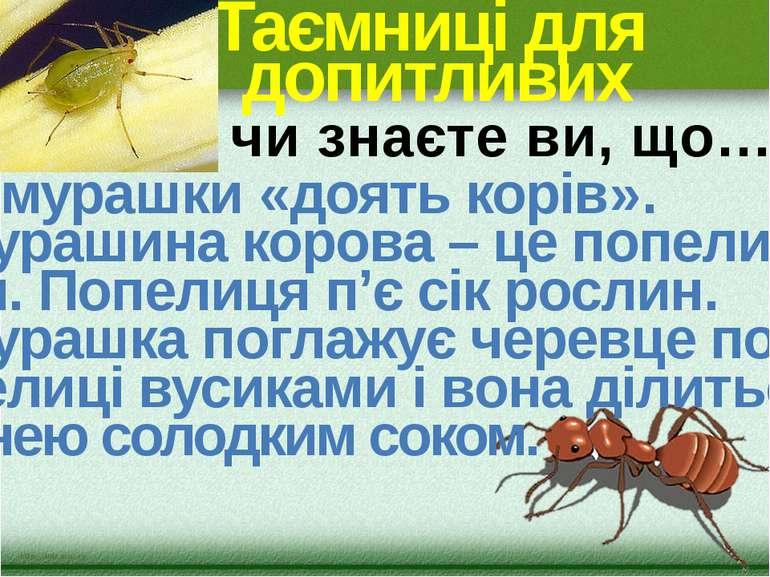 Таємниці для допитливих …мурашки «доять корів». Мурашина корова – це попели- ...