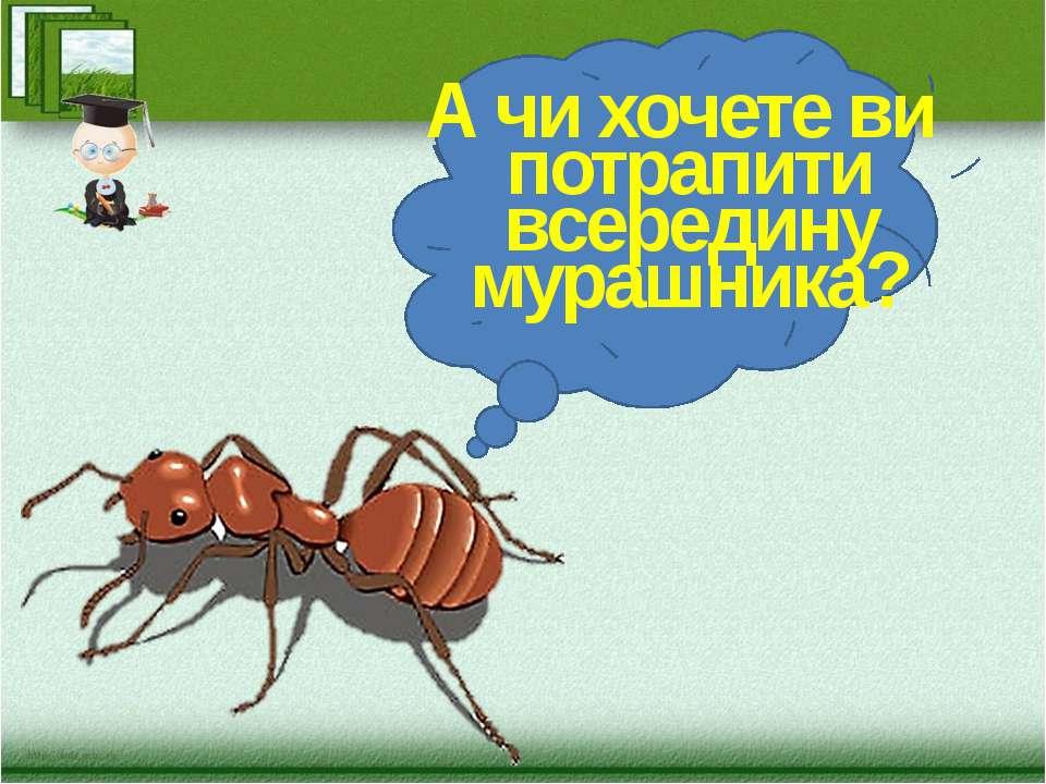 А чи хочете ви потрапити всередину мурашника?