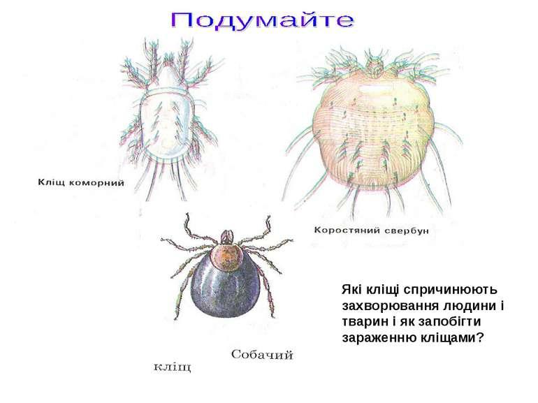Які кліщі спричинюють захворювання людини і тварин і як запобігти зараженню к...