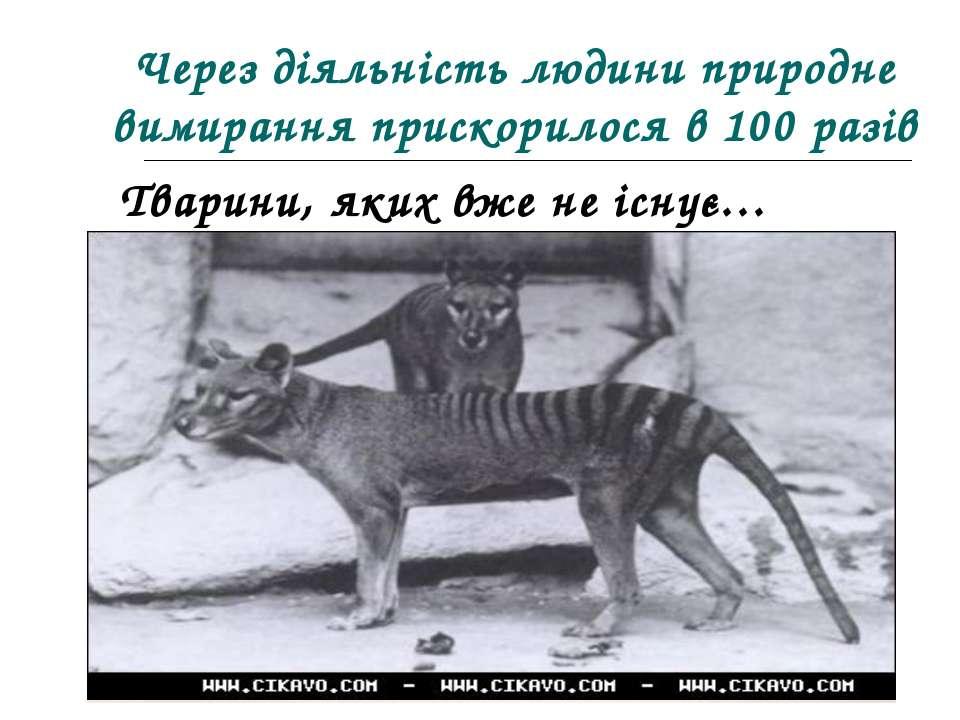 Через діяльність людини природне вимирання прискорилося в 100 разів Тварини, ...