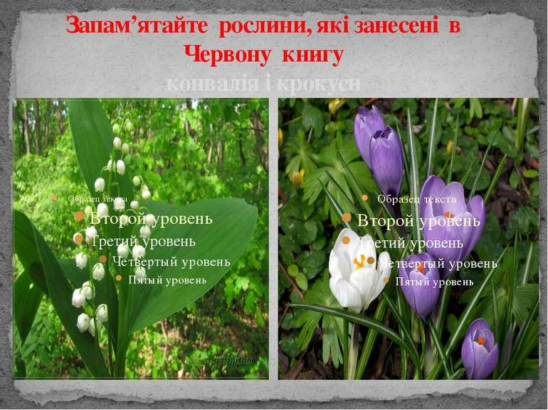 Запам'ятайте рослини, які занесені в Червону книгу конвалія і крокуси