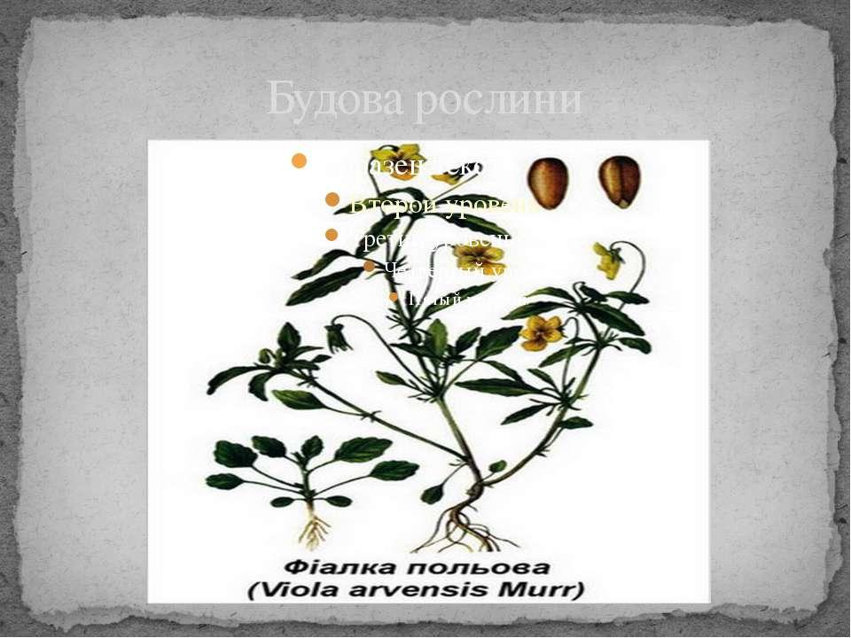 Будова рослини