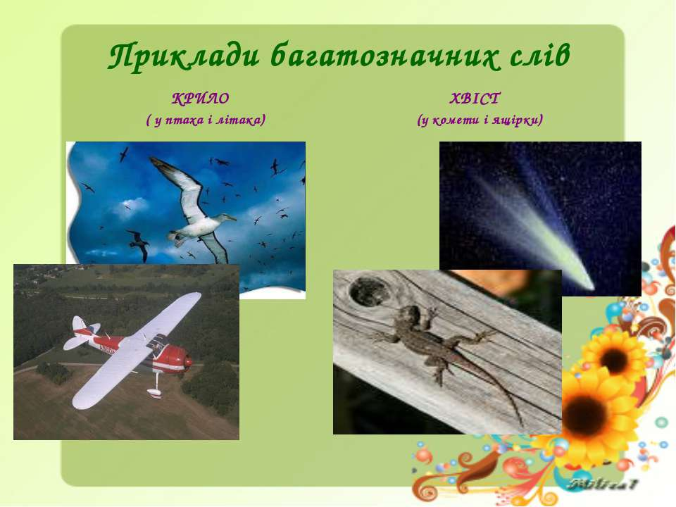 Приклади багатозначних слів КРИЛО ( у птаха і літака) ХВІСТ (у комети і ящірки)