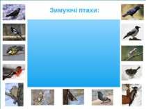 Зимуючі птахи: