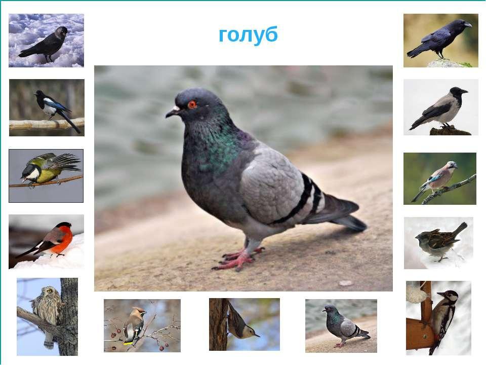 http://www.tmfoto.ru/upload/iblock/2b2/2b2392159434fc51e1341a56d35f67f5.jpg -...