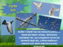 ГОЛУБИ Це справжні акробати. Бойні голуби під час польоту роблять перекид чер...