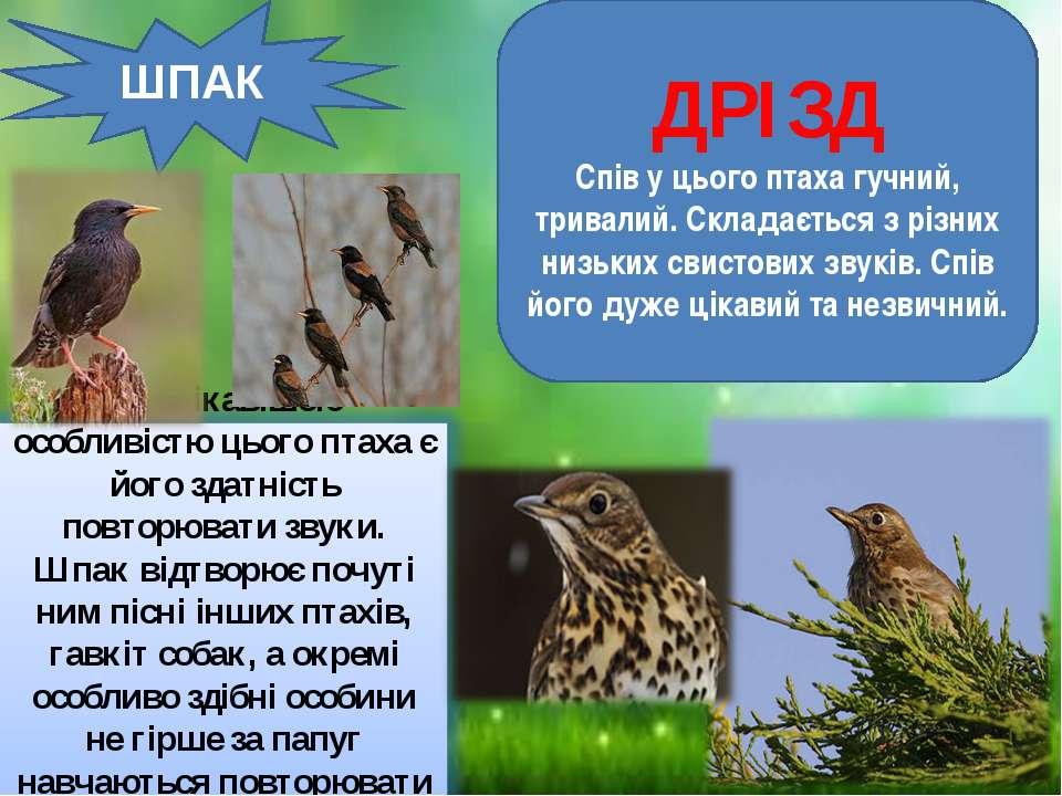 ШПАК ДРІЗД Спів у цього птаха гучний, тривалий. Складається з різних низьких ...