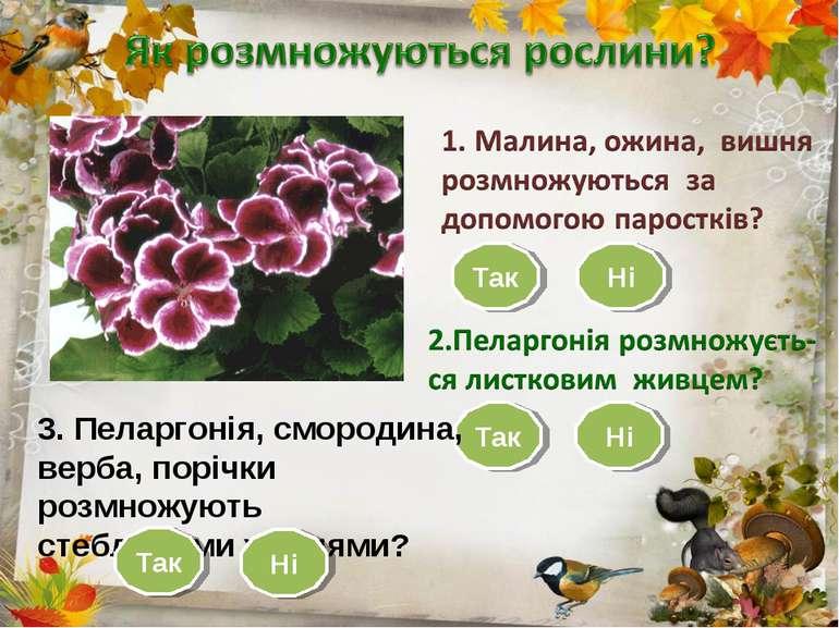 Так Ні Так Ні 3. Пеларгонія, смородина, верба, порічки розмножують стебловими...