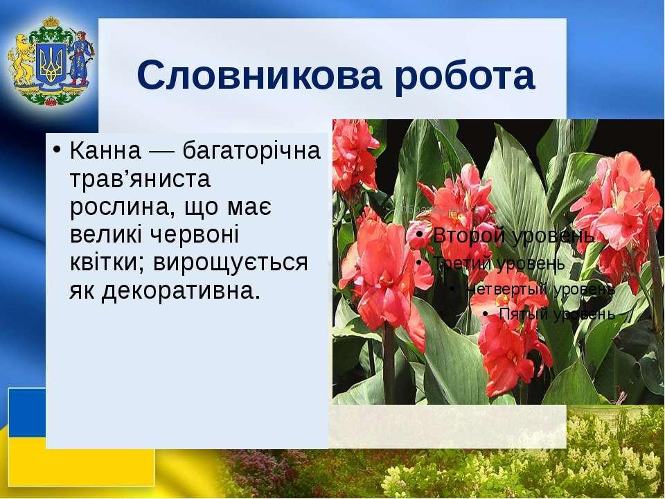 Словникова робота Канна — багаторічна трав'яниста рослина, що має великі черв...