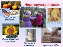 Чим годують пташок Пшоно та інші крупи Гарбузове насіння Соняшникове насіння ...