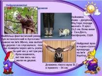 Найдивовижніші рекордсмени Могильська О. В. Цікаве з життя собак і котів, 201...