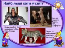 Найбільші коти у світі Могильська О. В. Цікаве з життя собак і котів, 2014 р....