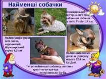 Найменші собачки Могильська О. В. Цікаве з життя собак і котів, 2014 р. Найме...