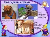 Найгидкіші собаки Могильська О. В. Цікаве з життя собак і котів, 2014 р. США,...