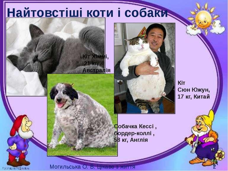 Найтовстіші коти і собаки Кіт Хіммі, 21 кг, Австралія Кіт Сюн Южун, 17 кг, Ки...