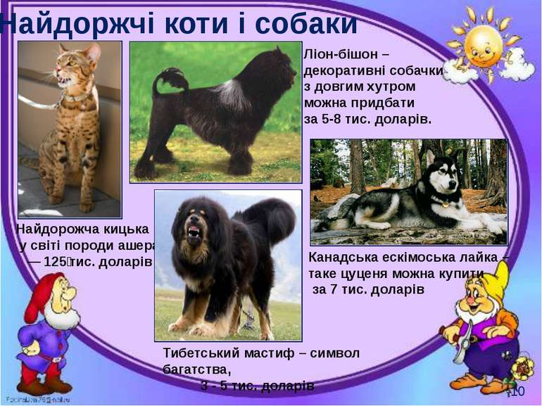 Найдоржчі коти і собаки Могильська О. В. Цікаве з життя собак і котів, 2014 р...