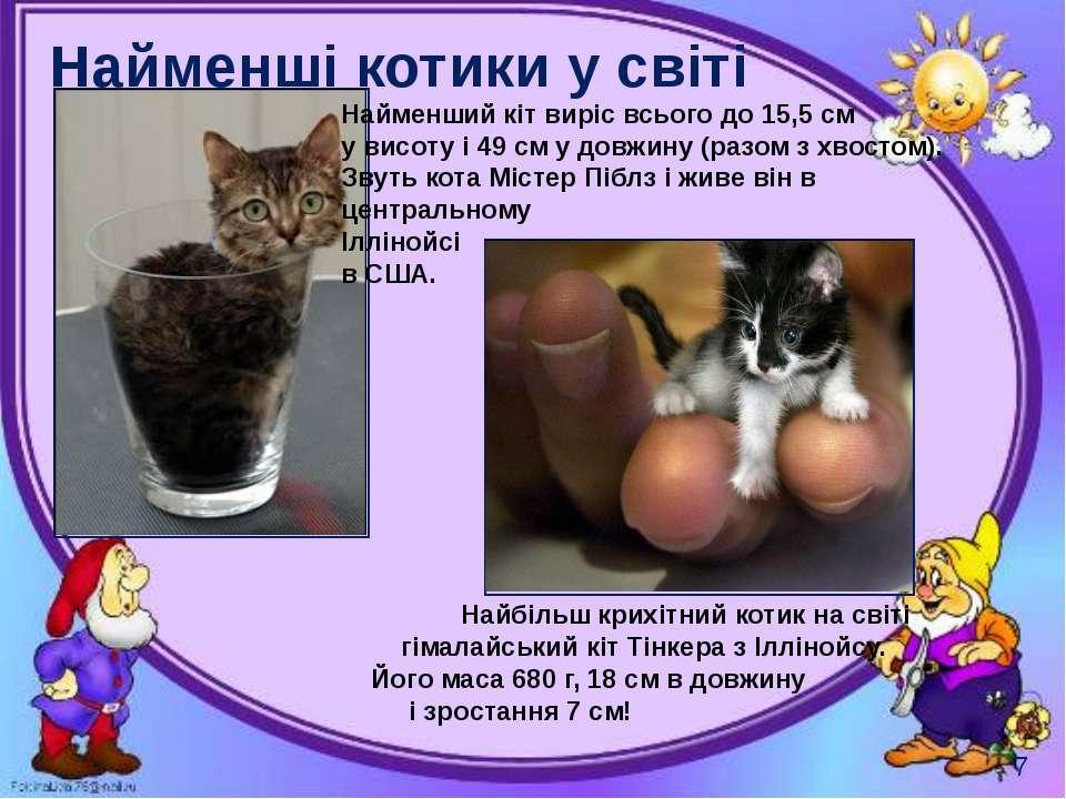 Найменші котики у світі Могильська О. В. Цікаве з життя собак і котів, 2014 р...