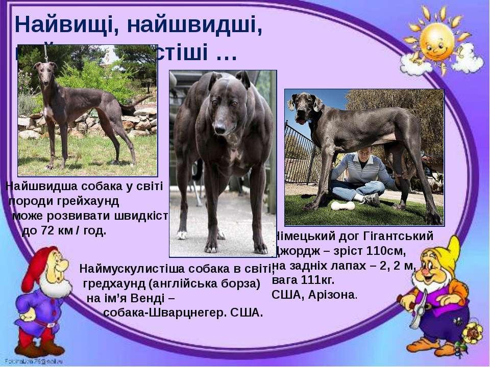 Найвищі, найшвидші, наймускулистіші … Могильська О. В. Цікаве з життя собак і...