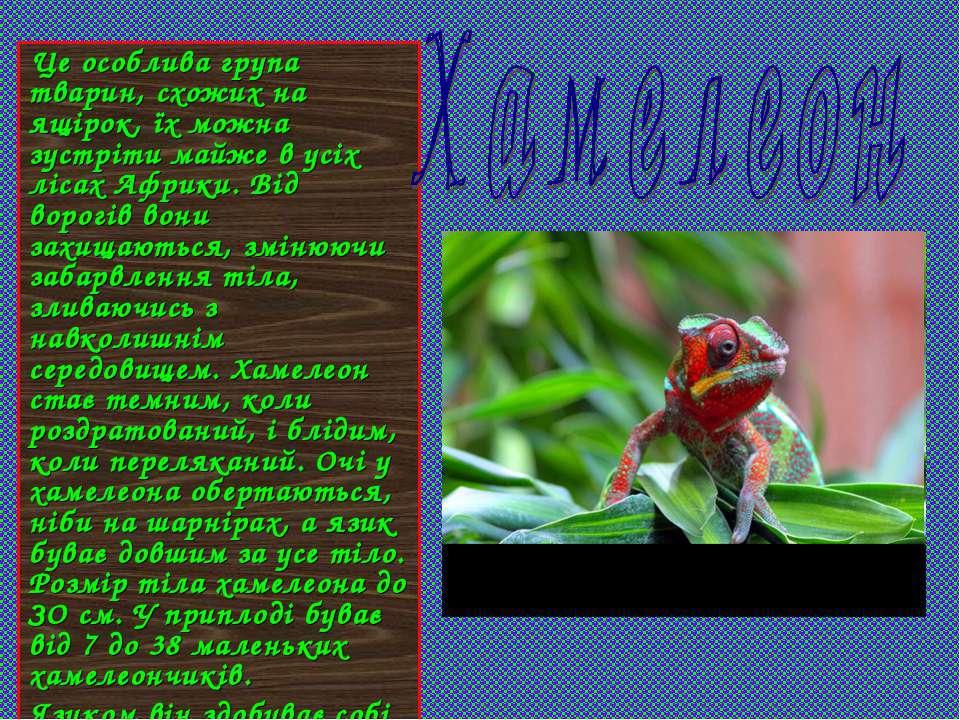 Це особлива група тварин, схожих на ящірок, їх можна зустріти майже в усіх лі...