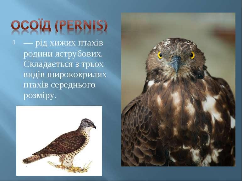— рід хижих птахів родини яструбових. Складається з трьох видів ширококрилих ...
