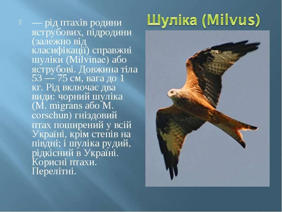 — рід птахів родини яструбових, підродини (залежно від класифікації) справжні...