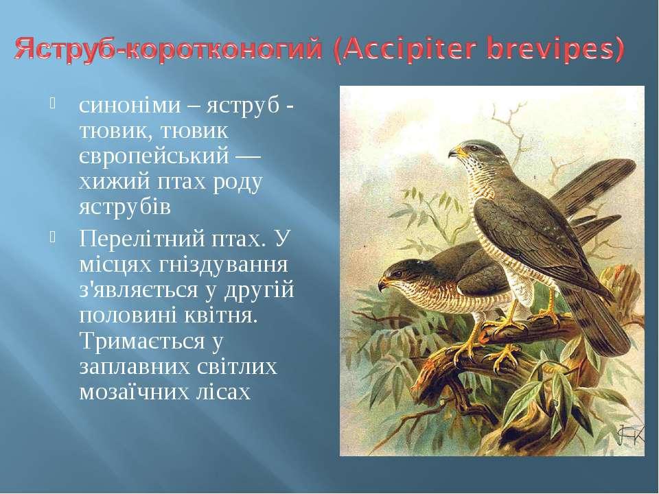 синоніми – яструб - тювик, тювик європейський — хижий птах роду яструбів Пере...