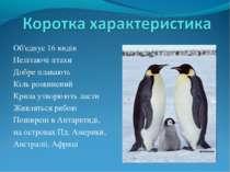 Об'єднує 16 видів Нелітаючі птахи Добре плавають Кіль розвинений Крила утворю...