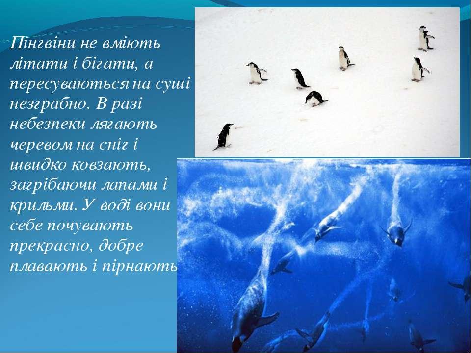 Пінгвіни не вміють літати і бігати, а пересуваються на суші незграбно. В разі...