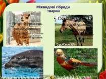 Міжвидові гібриди тварин