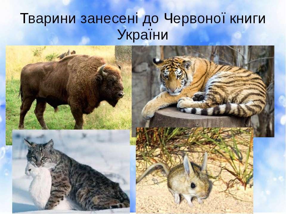 Тварини занесені до Червоної книги України