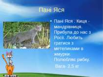 Пані Яся Пані Яся . Киця - мандрівниця. Прибула до нас з Росії. Любить гратис...
