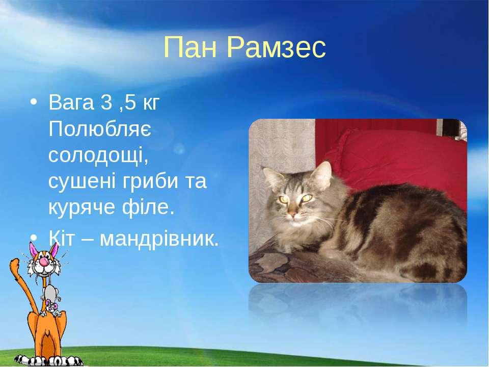 Пан Рамзес Вага 3 ,5 кг Полюбляє солодощі, сушені гриби та куряче філе. Кіт –...